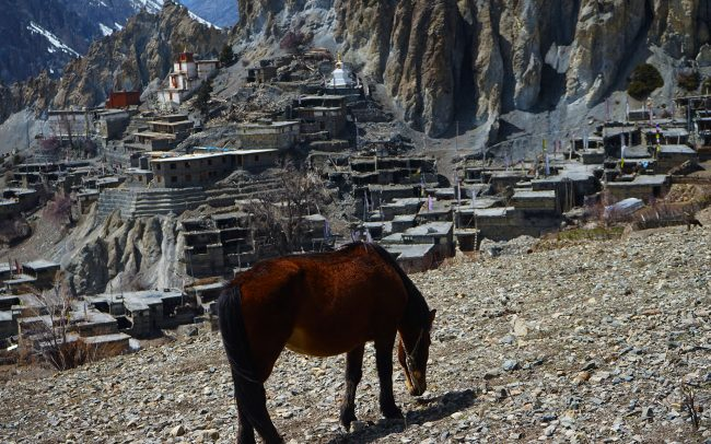 Horse grazes in Braka village